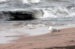 Just one of many gulls on our private beach.