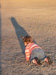 The autumn sun casts a long shadow on Samantha as she exhibits her independent streak.